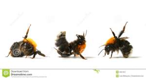 dance-bumble-bee-5957307
